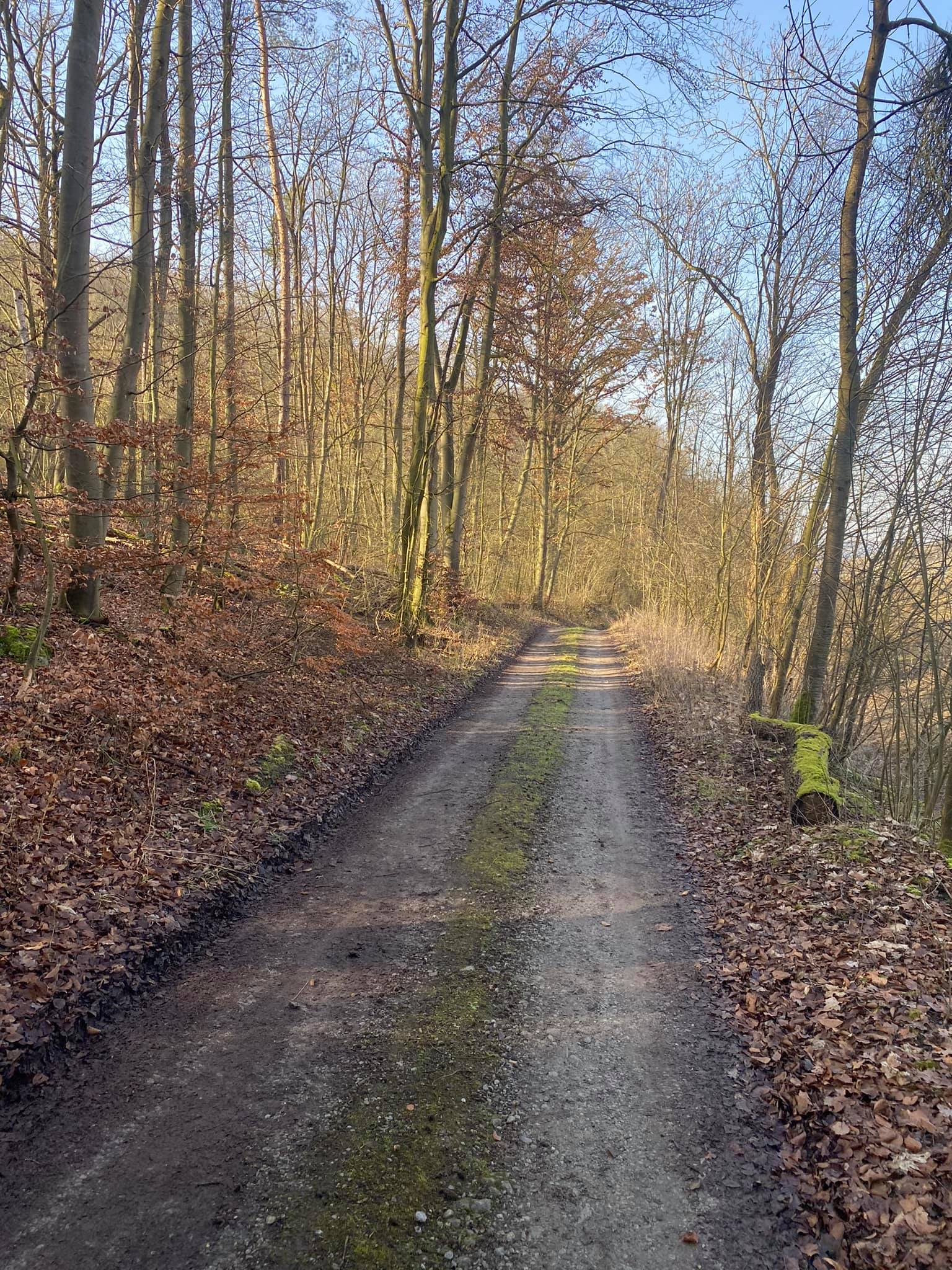 Der Verkehr zum neuen Steinbruch soll durch den Lützelgrund abgewickelt werden